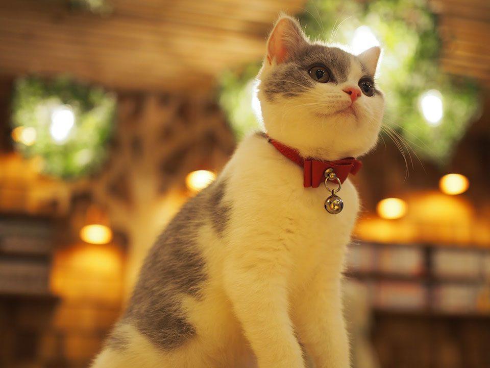 猫カフェMoCHA秋葉原店のディクラッセ照明