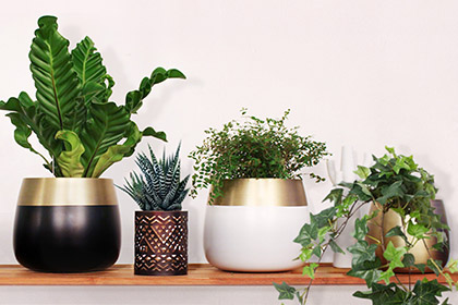 Orino_planter